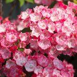 今週の365 DAYS OF TOKYO(6月13日~6月19日) ~ 初夏の谷中と日暮里の花々