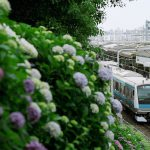 【Tokyo Train Story】諏方神社の紫陽花(京浜東北線)【フィルムカメラ】