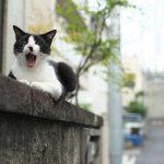 今週の365 DAYS OF TOKYO(7月25日~7月31日) ~ 谷中と日暮里のネコ特集