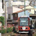 【Tokyo Train Story】バラがいっぱいの都電荒川線三ノ輪橋電停