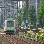 【Tokyo Train Story】バラ色の世界を走る都電荒川線