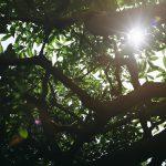 Nikon FM2とロモグラフィーのフィルムで撮影する谷中の路地裏風景【フィルムカメラ】