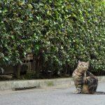 今週の365 DAYS OF TOKYO(7月11日~7月17日) ~ 荒川区と台東区のネコたち
