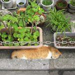 今週の365 DAYS OF TOKYO(8月8日~8月14日) ~ 北千住と目白のネコたち