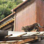 今週の365 DAYS OF TOKYO(8月1日~8月7日) ~ 上野、荒川、北千住のネコたち