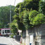 【Tokyo Train Story】緑がいっぱいの季節(都電荒川線)