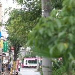 【Tokyo Train Story】緑の向こうに都電荒川線が走る風景