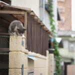 今週の365 DAYS OF TOKYO(9月12日~9月18日) ~ 谷中のネコと不忍池