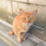 福岡での旅の途中で出会ったネコたちを撮影してみた #地域ブログ