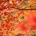 東京都檜原村にある都民の森での紅葉散策から奥多摩町のはとのす荘で豪華な食事と温泉の快適宿泊!秋の景色とグルメが最高!(旅の2日目まとめ)【PR】 #tokyoreporter #tamashima #tokyo #hinohara #okutama #Reviews_PR