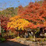 紅葉の絶景を拝みながら奥多摩湖の周囲を歩いてみた!湖に浮かぶ麦山浮橋も必見!(旅の3日目まとめ)【PR】 #tokyoreporter #tamashima #tokyo #okutama #Reviews_PR