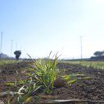 東京都武蔵村山市にある小麦畑の石川園で麦踏み体験をしてきた! #MM教え隊