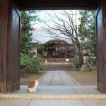 Nikon D750とNikon 1 J5で撮影した東京のネコたち