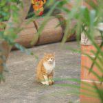 大分県の別府路地裏散歩で温泉街らしい風景やネコを撮る #地域ブログ