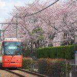 荒川二丁目電停付近で都電荒川線と桜の風景を撮影しよう! #地域ブログ #Locketsリレー #桜