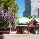 境内に藤の花咲く山王日枝神社を参拝 山の下から上へと延々と鳥居が並ぶ山王鳥居も必見ですよ #地域ブログ