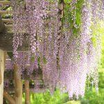ゴールデンウィークの旧芝離宮恩賜庭園は藤、ボタン、ツツジ、タンポポ、コデマリなどの花々と新緑が楽しめます!のんびり庭園散策するのがお勧めですよ #地域ブログ