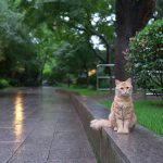 上海のフランス租界エリアにある復興公園にはネコがいっぱいいる! #ili #iliモニター #PR