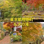 東京都檜原村で紅葉散策をするならば日本の滝百選にも入っている払沢の滝を見に行こう! #tokyoreporter #tamashima #tokyo #hinohara