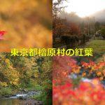 東京都檜原村で紅葉シーズンの早朝散歩 こんなにも神々しい紅葉の風景は初めて見た! #tokyoreporter #tamashima #tokyo #hinohara