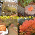 東京都檜原都民の森で紅葉トレッキング 整備されて歩きやすいコースは紅葉を眺めながらの山歩きに最適です! #tokyoreporter #tamashima #tokyo #hinohara