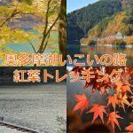 秋の紅葉シーズンに奥多摩湖いこいの路から麦山浮橋を渡る奥多摩湖半周のトレッキングが最高に気持ちいい! #tokyoreporter #tamashima #tokyo #okutama