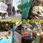 【タイ情報】タイに滞在した6日間で27匹のネコを撮影したみた! #AmazingThailand #LoveThailand