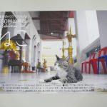 平成29年(2017年)12月23日(土)から平成30年(2018年)1月7日(日)まで文京区千駄木にあるぎゃらりーKnulpにて「ねこ -vol.8-」展が開催 とくとみ撮影の写真が展示されます! #地域ブログ