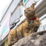 2月22日はにゃんにゃんにゃんのネコの日ということで、この1年間に東京、中国、タイで撮影したネコ写真を紹介します