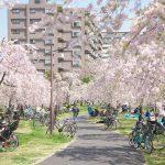 東京都荒川区にある尾久の原公園の桜が満開だったのでお花見してきた! #地域ブログ #荒川区 #Locketsリレー2018春