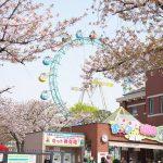 東京都荒川区にある「あらかわ遊園」内のお勧め桜スポット3選 #地域ブログ #荒川区 #Locketsリレー2018春