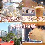 東京のど真ん中にある大手町牧場で0歳児と一緒に鳥、豚、ヤギなどを見学してきた!カフェのソフトクリームもお勧め #育児