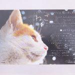 平成30年(2018年)11月17日(土)から11月25日(日)まで、文京区千駄木にあるぎゃらりーKnulpで「ねこ vol.10」展が開催 とくとみが撮影した写真も展示されます