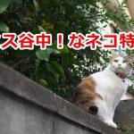 「天才!志村どうぶつ園」にも出てきたネコのミス谷中の美しさを写真でたっぷり紹介します