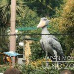 上野動物園にてiPhone 7 Plus + DJI Osmo Mobile 2で動画撮影(ハシビロコウが飛ぶところやカピバラの食事シーンもあり) #育児