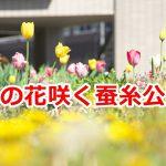 チューリップなどの春の花が咲き誇る長野県岡谷市にある蚕糸公園 #諏訪の国公式アンバサダー