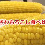 山田さんと林さんが作った「ひざわもろこし」のゆめあかりを食べ比べてみた #諏訪の国公式アンバサダー